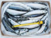 Продовольствие Рыба и рыбопродукты, цена 2.20 €/кг., Фото