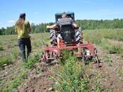 Сельское хозяйство Семена и рассада, цена 0.80 €, Фото