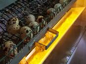 Продовольствие Яйца, цена 0.10 €, Фото