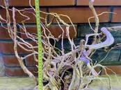 Zivtiņas, akvāriji Ūdens augi, cena 23 €, Foto